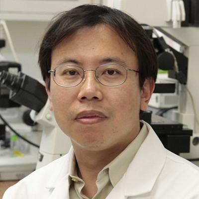 Hui Sun, Ph.D.