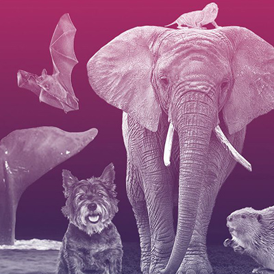 Why Scientists Are Studying the Genetic Tricks of the Longest-Lived Animals