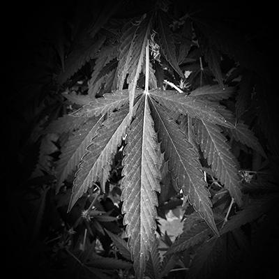High Time: Alyson Martin And Nushin Rashidian On The Move Toward Legalizing Cannabis