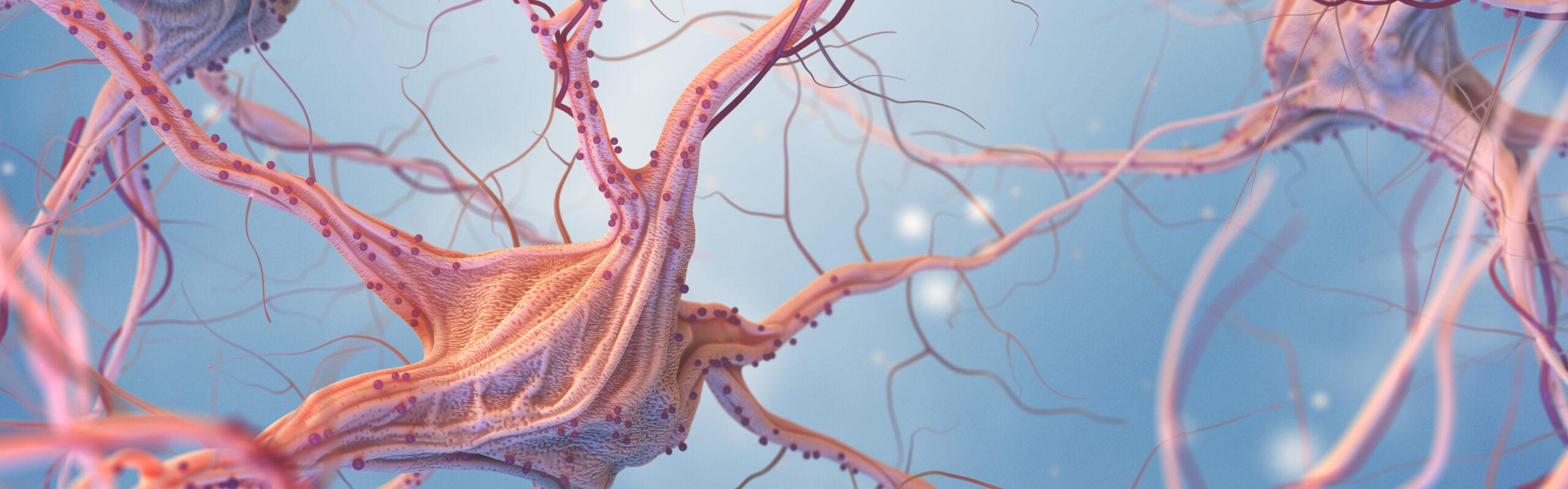 Neural Repair Image